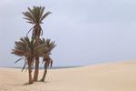 Sables et musiques du Cap-Vert